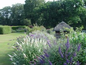 Display Buddleja davidii by the summer house Longstock Park Garden Peter Moore