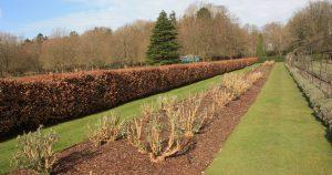 Pruning complete Nursery Gardens